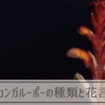 カンガルーポーの種類と花言葉