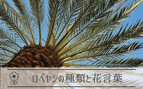 ロベヤシの種類と花言葉