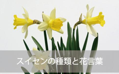 スイセンの種類と花言葉