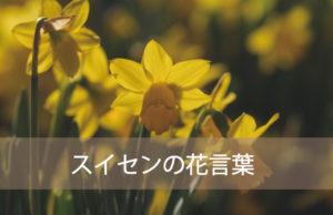 スイセンの花言葉