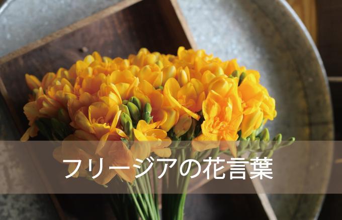 フリージアの花言葉