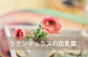 ラナンキュラスの花言葉