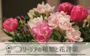 フリージアの種類と花言葉