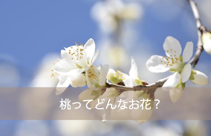 桃(もも)ってどんなお花?