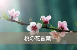 桃(もも)の花言葉