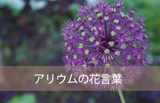 アリウム(ギガンジューム)の花言葉