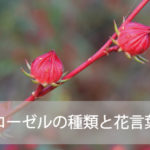 ローゼルの種類と花言葉