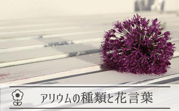 アリウム(ギガンジューム)の種類と花言葉