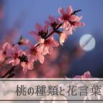 桃(もも)の種類と花言葉