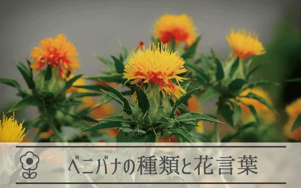 ベニバナの種類と花言葉