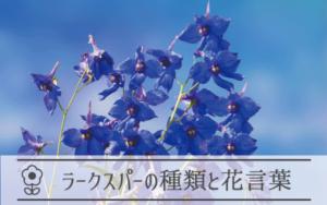 ラークスパーの種類と花言葉