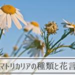 マトリカリアの種類と花言葉
