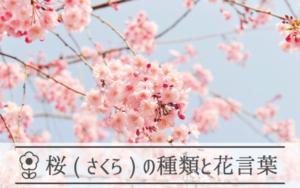 桜の種類と花言葉