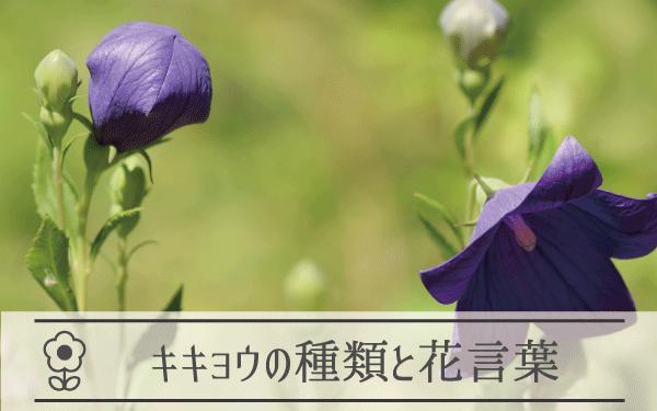 キキョウの種類と花言葉