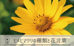 ヒメヒマワリの種類と花言葉