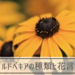 ルドベキアの種類と花言葉